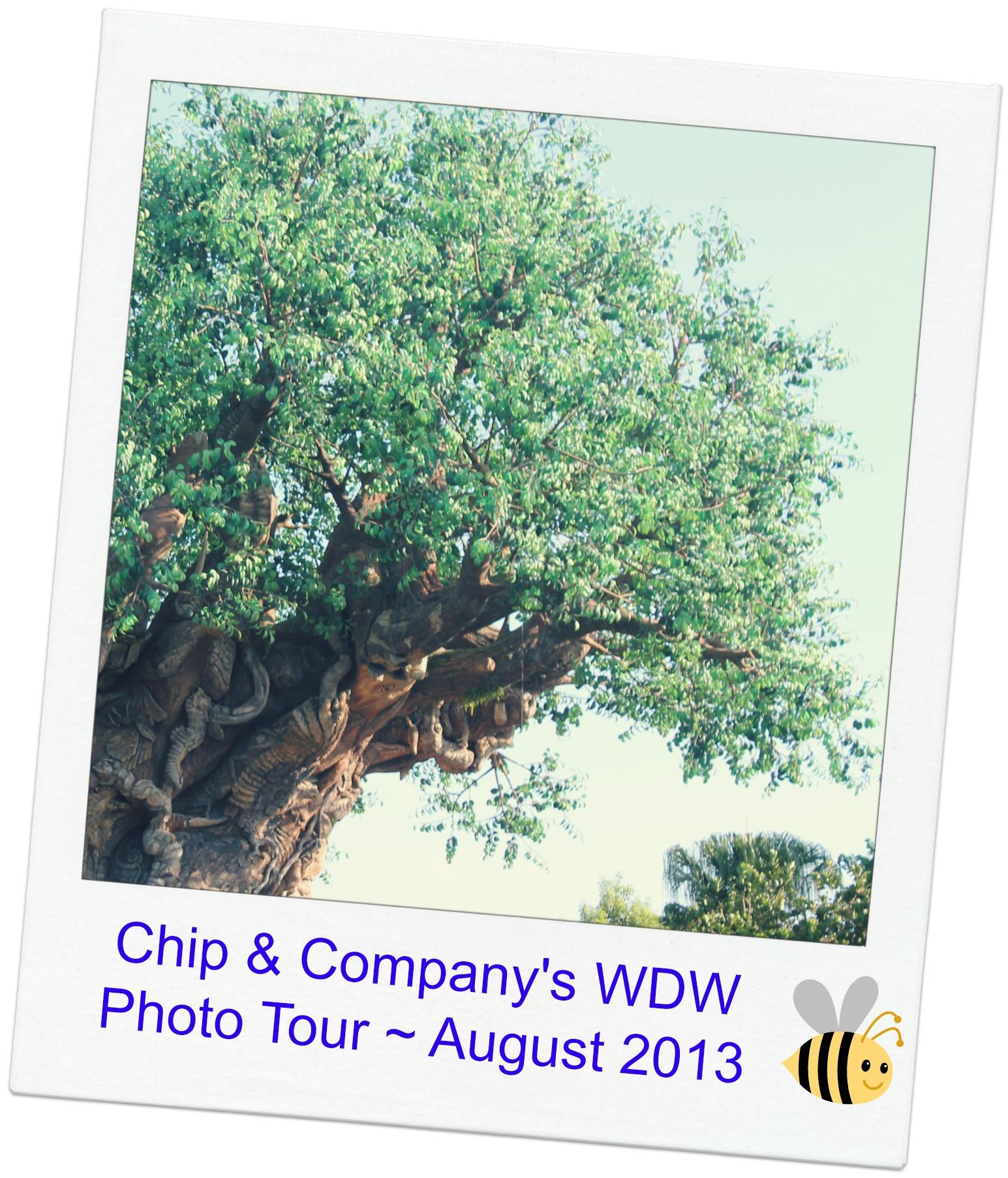 Tree of Life CC